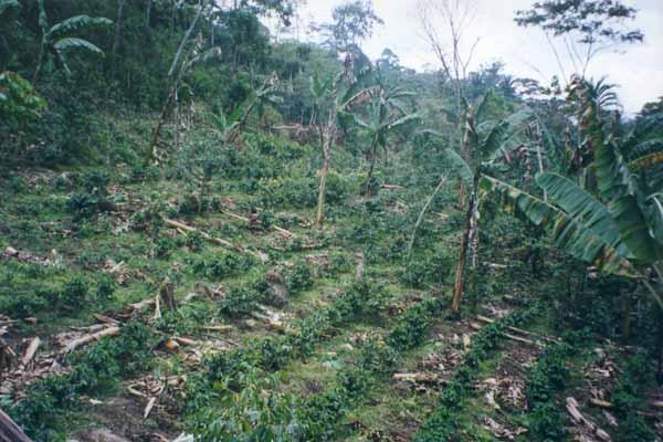 Nouvelle plantation