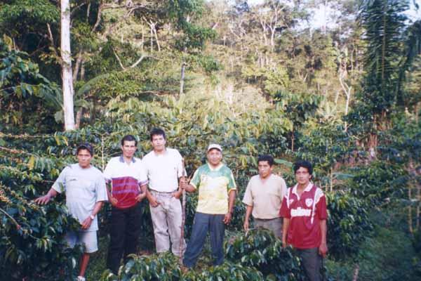 Producteurs de Sanchirio dans leur champ