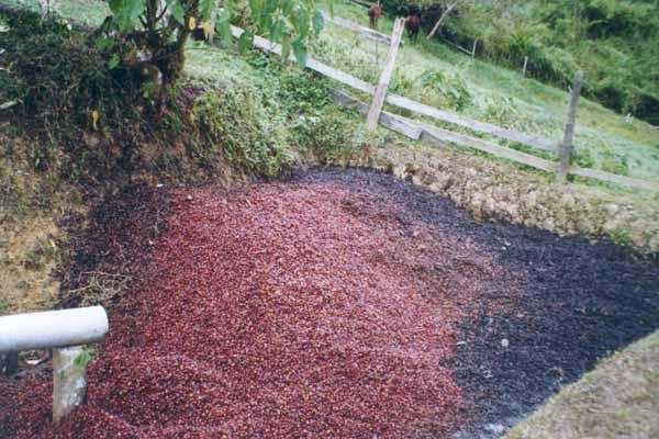 Production écologique : utilisation de la pulpe comme engrais organique