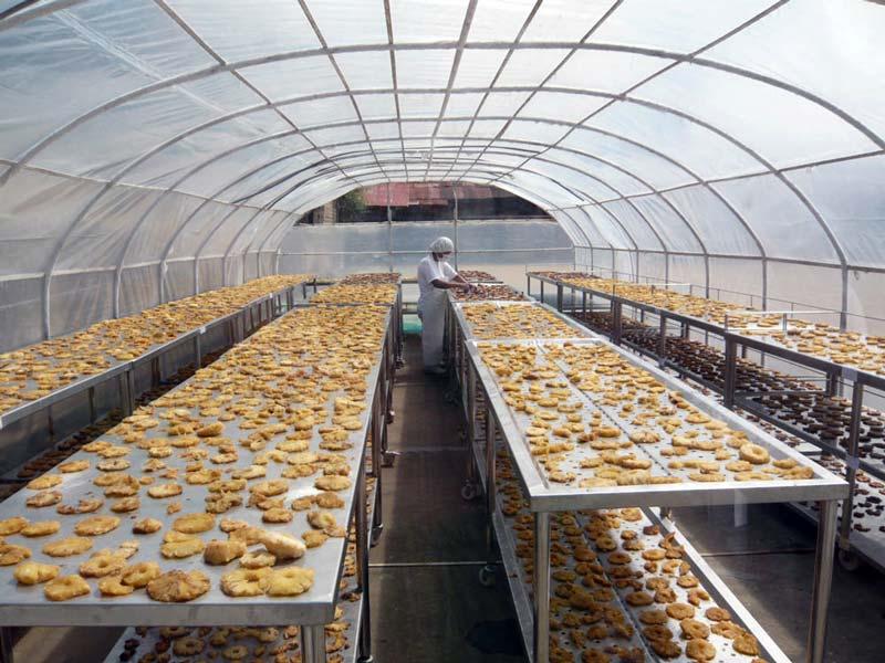 Séchoir solaire, production d'ananas