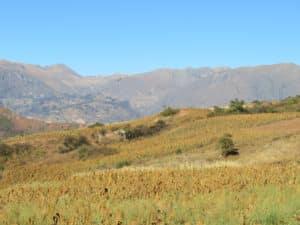 Secteur de Huampica, 2 800 m d'altitude
